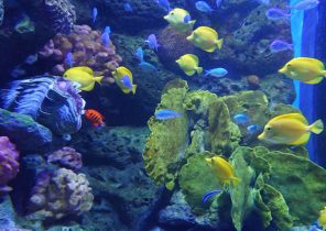 Fish-Sea Life Ocean World Bangkok